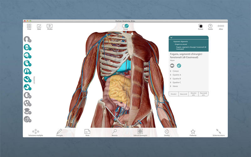 body atlas The biodigital human is a 3d platform that simplifies the understanding of anatomy, disease and treatments explore the body in 3d.