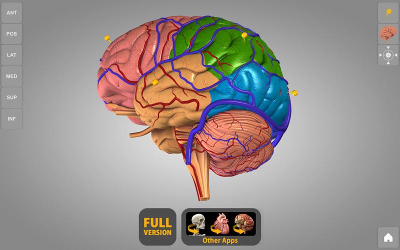 Brain - 3D Atlas of Anatomy Lite Bei Catfish Animation Studio S.r.l.