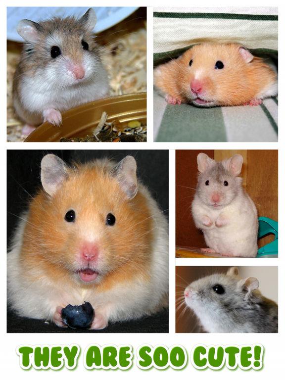 förspelet spel hamster free