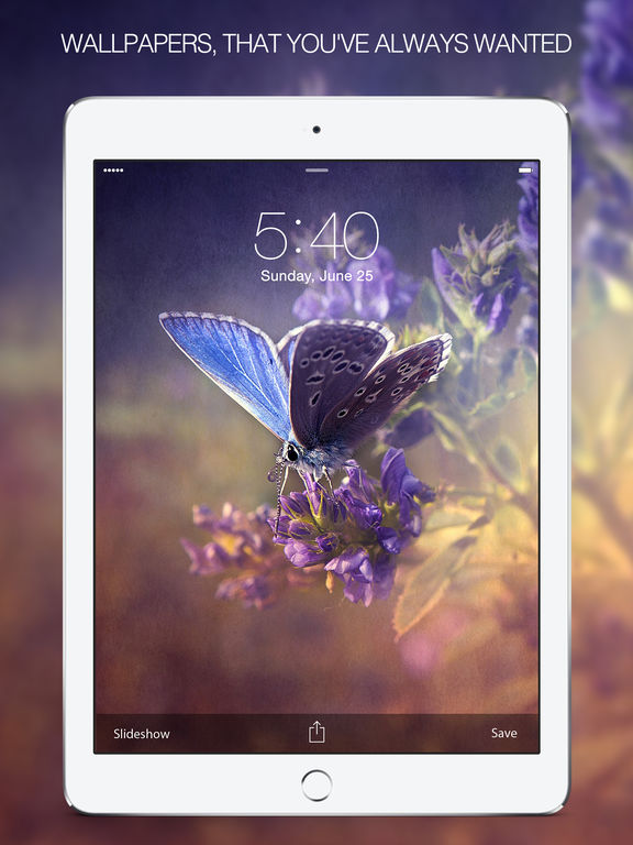 Butterfly Pictures & Butterfly Wallpapers Free Screenshot