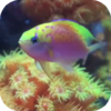 Fish Tank Free 金鱼缸 for Mac