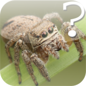 Araneae Spider Quiz icon