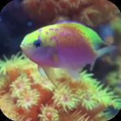 高清鱼缸屏幕 Fish Tank HD