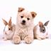 癒しの日めくりカレンダー『犬』篇 HD