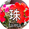 珠 -tama- Camera