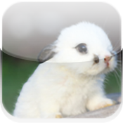 Supper Bunny icon