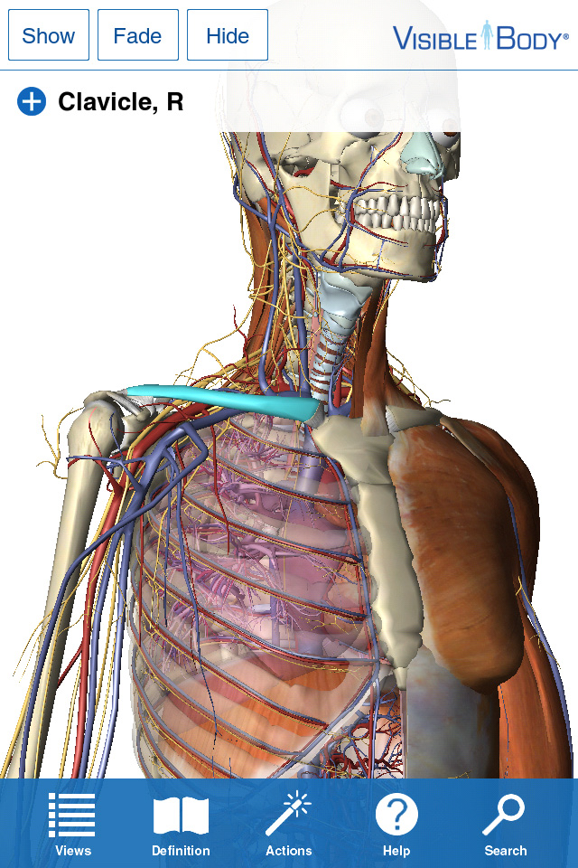 App Shopper: Visible Body for iPhone 4/4S 3D Human Anatomy Atlas ...