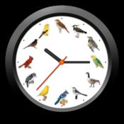 小鸟时钟 BirdClock