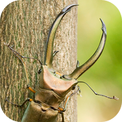 Stag Beetle Clock icon