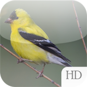 Backyard Birds of America HD icon
