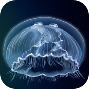 Underwater The Game icon
