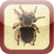 Pocket Tarantula 3D Pro - Spider Pet icon