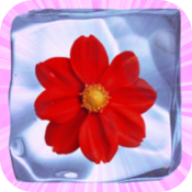 Icy Flower icon