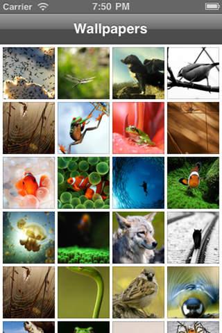 Animal Wallpaper+