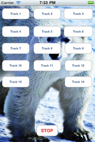Polar Bears - From Zoo and Arctic to U