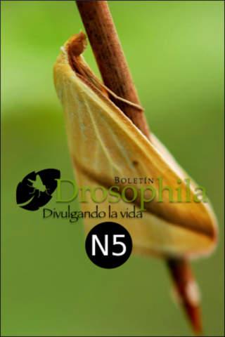 Boletin Drosophila N5