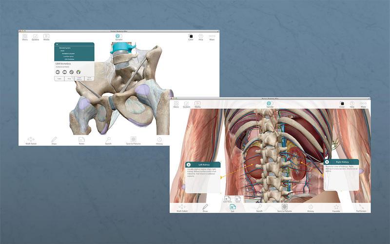 Human Anatomy Atlas – 3D Anatomical Model of the Human Body скриншот программы 5