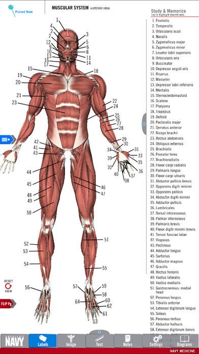anatomy study guide - america's navy on the app store, Muscles