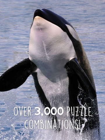 Orca Puzzles for Kids Jigsaw Wonder Editionscreeshot 2
