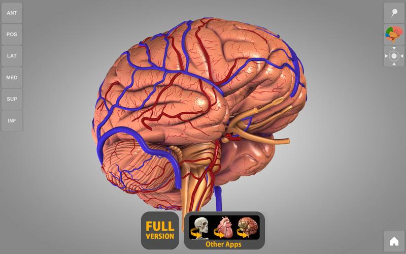 Brain 3D Atlas of Anatomy Lite Screenshot - 1