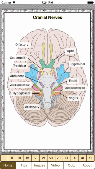 Cranial Nerves Plus
