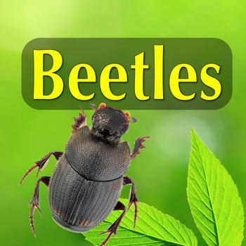 Beetles - An Introduction to North American Species LOGO-APP點子