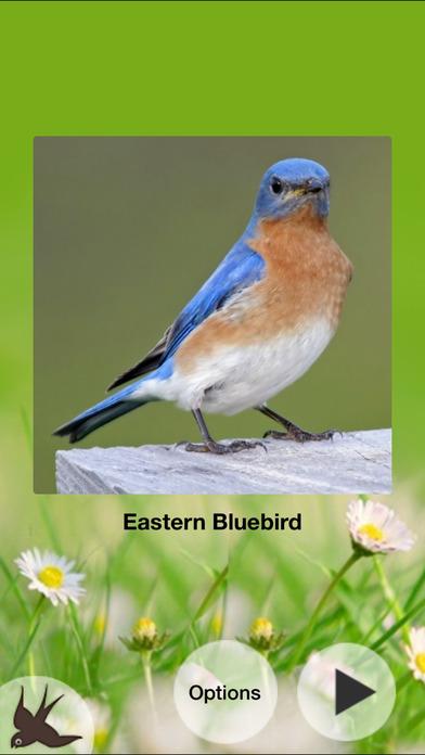 Chirp! Bird Songs USA iPhone Screenshot 4