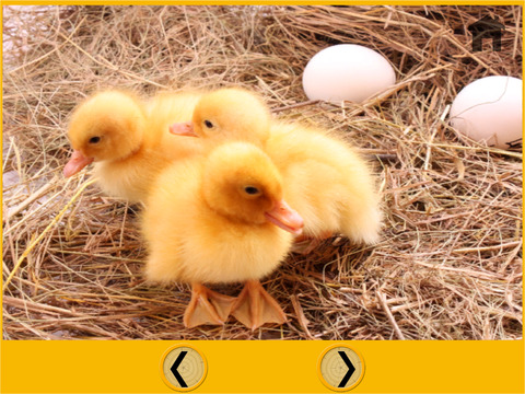 Farm animals slot for kids vip iPad Screenshot 5