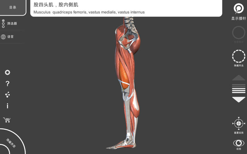 肌肉系统 – 上肢 – 三维解剖学图谱 – 人体的骨骼和肌肉   Muscular System Lite - Upper Limb - 3D Atlas of Anatomy for Mac
