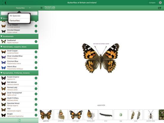Butterflies of Britain and Ireland iPad Screenshot 2