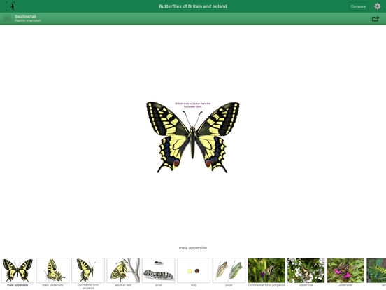 Butterflies of Britain and Ireland iPad Screenshot 1