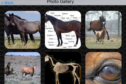 Horse Video and Photo Galleries FREE screenshot 4