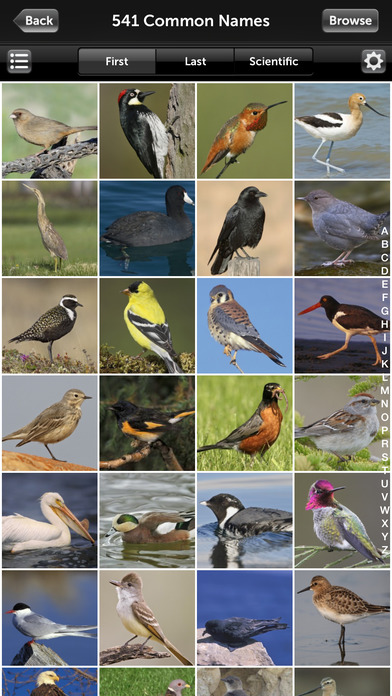 Audubon Birds California – A Field Guide to the Birds of California iPhone Screenshot 2