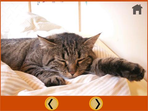 cats Trapshooting For Children iPad Screenshot 5