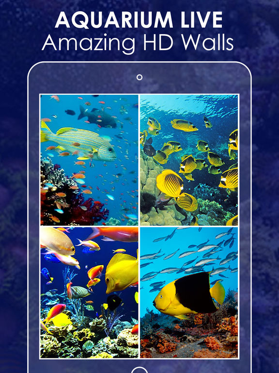 live wallpapers hd for iphone and ipod 13 app for ipad
