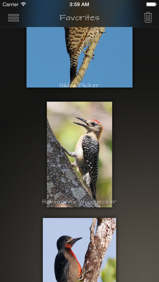 Woodpeckers Collection