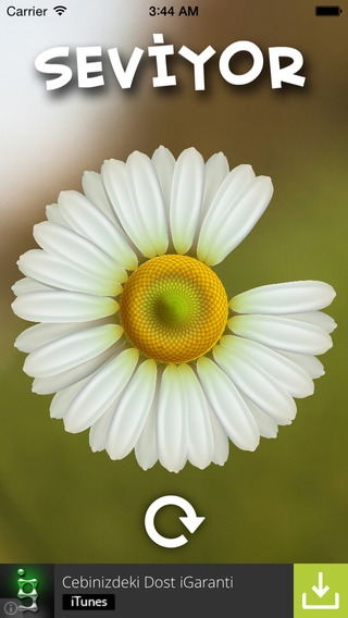 Daisy Fotrune
