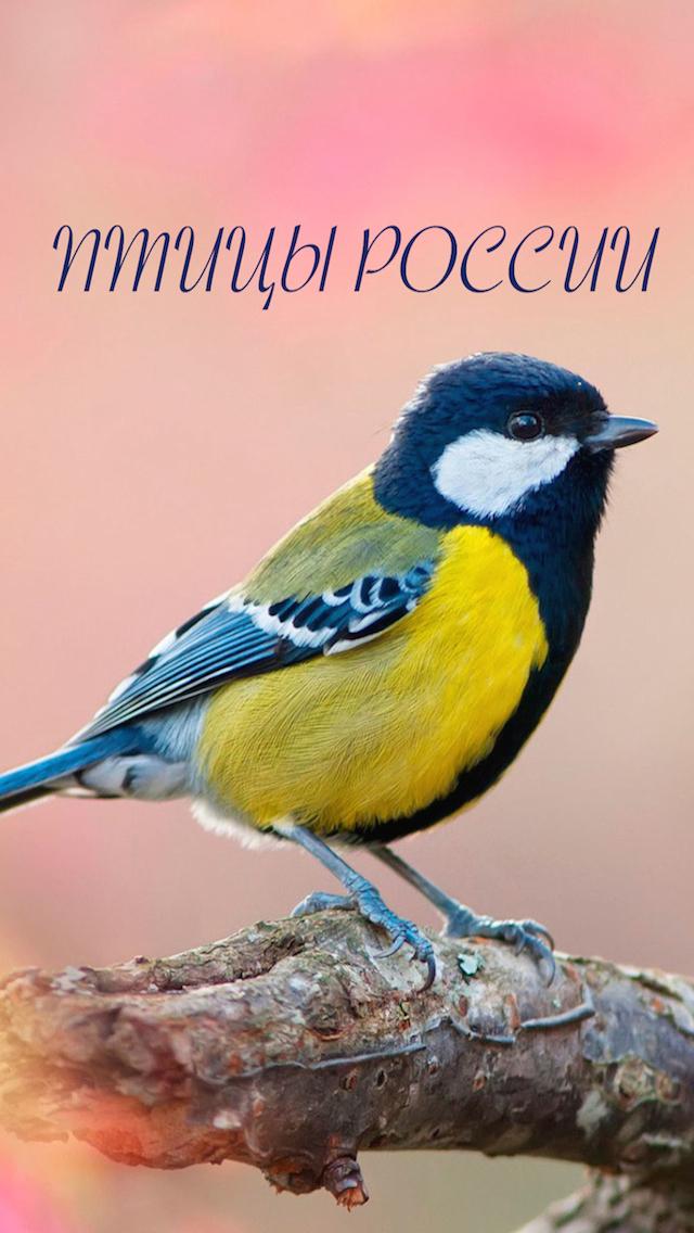 Птицы России - золотые голоса родной природы (free version)