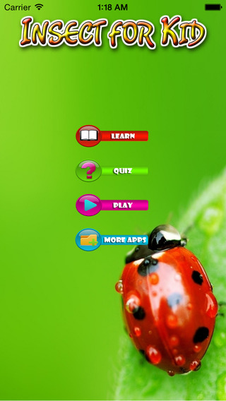 Insect For Kid - Educate Your Child To Learn English In A Different Way