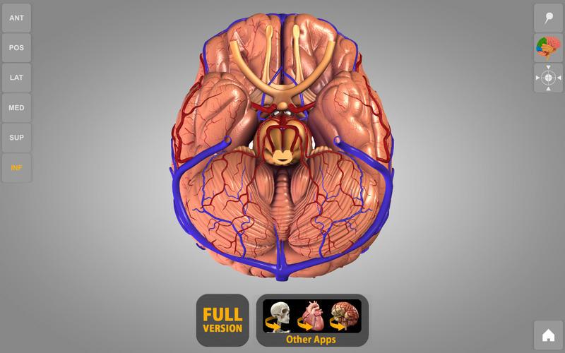 Brain 3D Atlas of Anatomy Lite Screenshot - 2