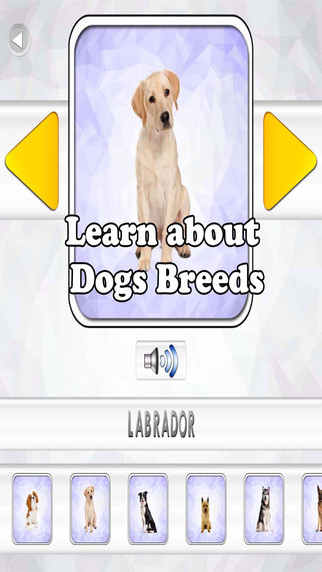 Learn about Dogs Breeds