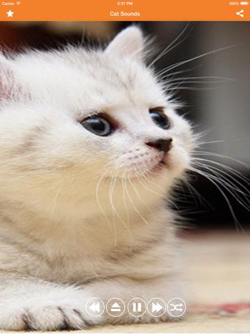 Скачать mp3 звук кошки
