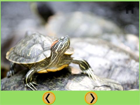 turtles bowling for children iPad Screenshot 5