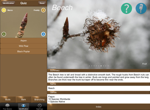 Winter TreeId - British Isles Tree Guide iPad Screenshot 4