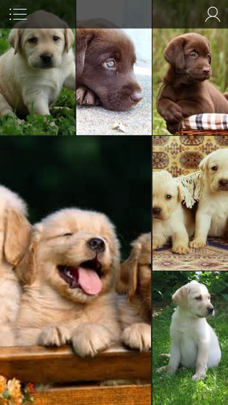 Puppy Wallpapers - Beautiful Cute Dogs And Puppies Photo Backgrounds