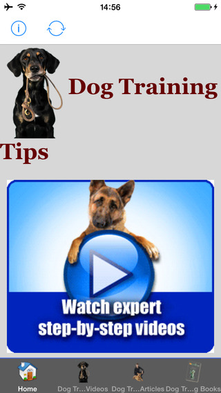 All Dog Training Tips and Tricks