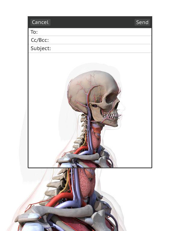 анатомия 3d сустав