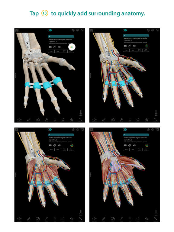 Human Anatomy Atlas - 3D Anatomical Model of the Human Body screenshot