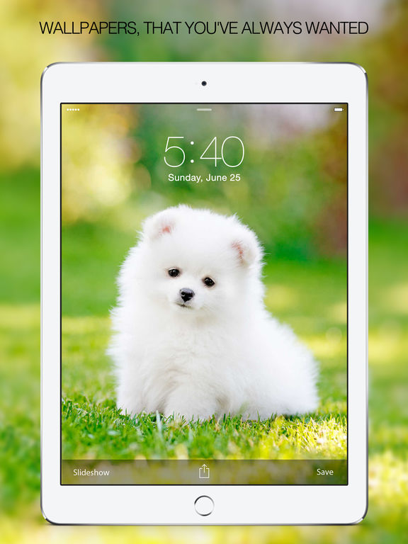 wallpapers of cute puppy