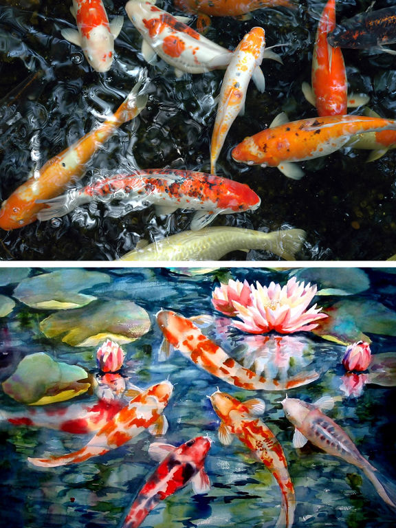 App shopper aqua koi fish pond photos of fishes and for Koi pond app